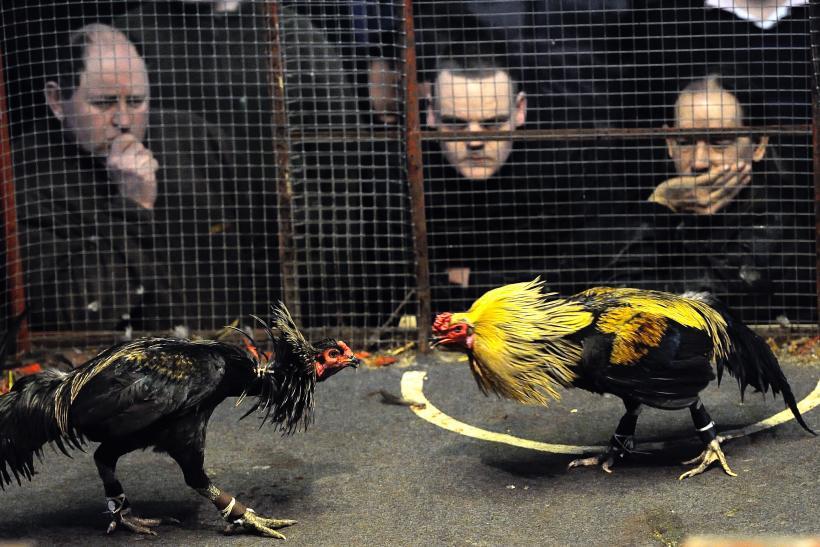 Trik Rahasia Menang Sabung Ayam S128