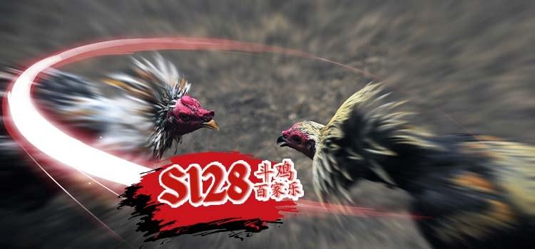 Judi Sabung Ayam Di S1288 Yang Terbaik